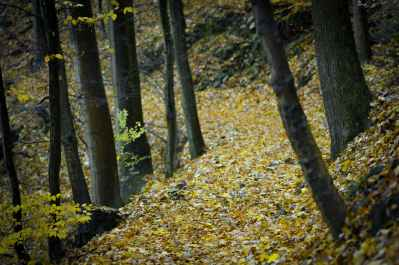 forest surrounded by yellow leaves on ground